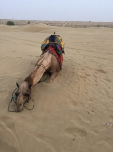This camel wanted a break.